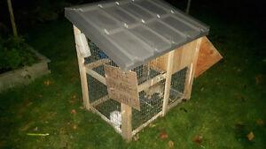 Bunnies & hutches Stratford Kitchener Area image 3