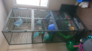 [REDUCED] Ferret and all accessories