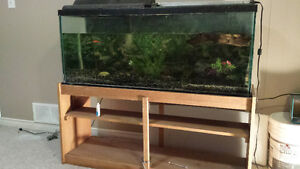 55 gallon Aquarium with solid wood stand and accessories