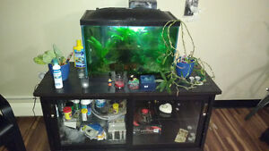 20 gallon - Aquarium with fish, plants, supplies and TV-stand