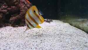 Looking for saltwater fish