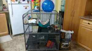 4 level cage, includes all accesories shown plus 2 rats.