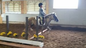 horseback riding lessons with certified coach