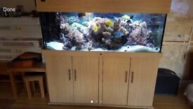 5x2x2ft wood marine tropical fish tank aquarium with full setup (delivery/installation)
