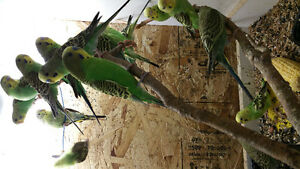 Birds for rehoming-various species