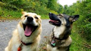 Experienced off leash dog walker