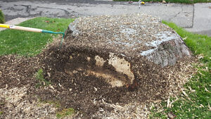 Stump removal Kawartha Lakes Peterborough Area image 9