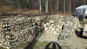 next season or early spring firewood for sale Kingston Kingston Area image 1