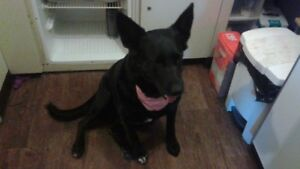 FEMALE BLACK DOG FOR REHOMING
