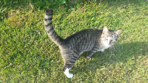 1 yr old Neutered Male cat. Free to good home