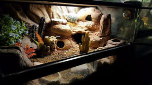 Leopard Gecko and Exo-Terra Terrarium for sale to good home.