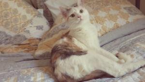 Chatons et chats pour adoption ( personnes sérieuses seulement )