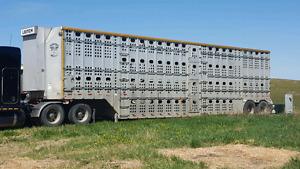 Merit tandem cattle trailer
