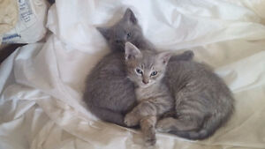 Adorable Kittens - Ready for New Homes