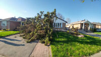 * Best Rate Tree services * TREE REMOVAL / Tree trimming / Prune