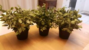 Artificial plant pots x 3