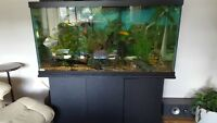 complete 90 gallon fish tank and stand with lots of fish