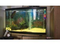 3ft Aqua marine 900 fish tank