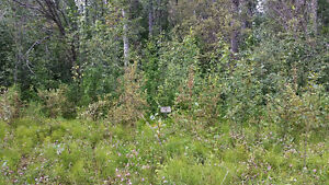 10% off!! OUR BEST TREED LAKE LOT! RENT TO OWN IT !