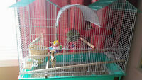 2 Zebra Finches, Cage and Acces