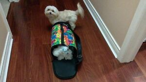 Animal Carrier For a Small Dog / Cat