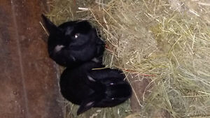 2 young female rabbits
