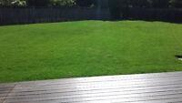 Grass Cutting Brampton North/ West