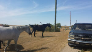 Please help! My horses need a home!