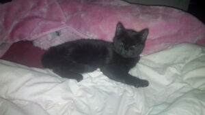 ***Kitty missing from abbotsfield road***