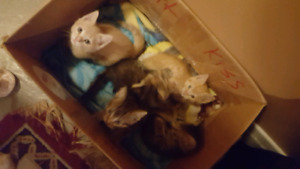 5 kittens in need of new homes!