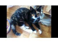Missing cat from Elvington