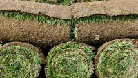 ★★★Ottawa #1 Sod Delivery | Next Day | Small Quantities
