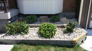 Landscaping, Sodding, Ground Covers for Spring 2017 London Ontario image 5