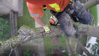 Tree Pruning & Tree Removal