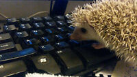 Super Sweet baby Hedgehogs