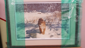 Mountain Lion professionally framed prints