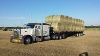 hay for sale Langdon