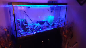 65 GALLON FISH TANK WITH EVERYTHING!!!