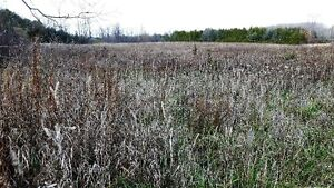 PRIME LOCATION! 47 ACRES ON SAUGEEN RIVER London Ontario image 6