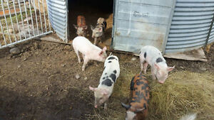 Weaners