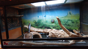Bearded dragon/reptile habitat