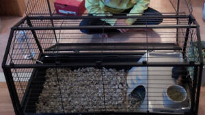 Guinea Pig (or rabbit) cage x2 + many accessories