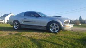 Mustang 2005