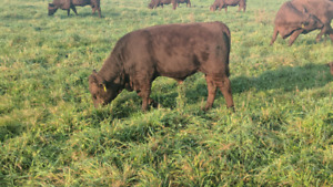 LF: Pasture near Wooler