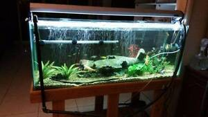 "PRICE REDUCED..!!!! 4"" Fish tank + Stand + Fish + accessories Angle Park Port Adelaide Area Preview"
