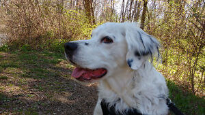Dog walker, pet sitter