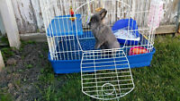 GOOD STARTER KIT Bunny cage and accessories