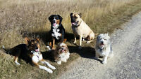 NW Dog Walker - Insured, First Aid Certified, Small Groups