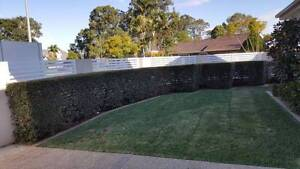 FROM $25, Quality lawn mowing, gardening and property maintenance Blacktown Blacktown Area Preview