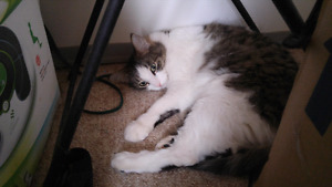 Male cat free to loving home